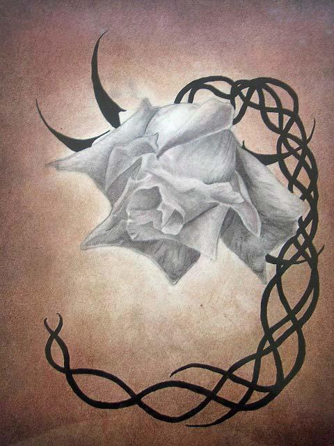 Rose Marque